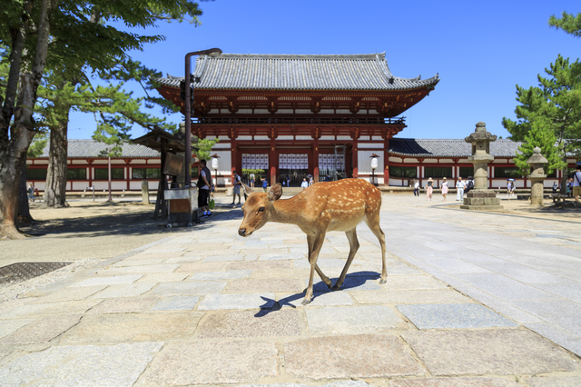 Todaiji Temple and Deer in Nara